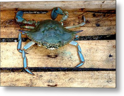 A Crab In A Wooden Box Metal Print by Olga R