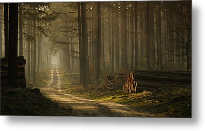 A Forest Walk Metal Print by Jan Paul Kraaij