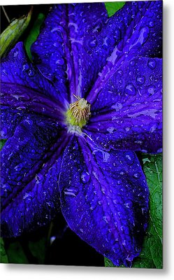 A Gentle Rain Metal Print by Frozen in Time Fine Art Photography