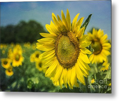 A Grand Sunflower Metal Print by Terry Rowe