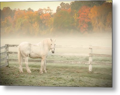 A Horse With No Name Metal Print by K Hines