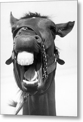 A Huge Horse Laugh Metal Print by Underwood Archives