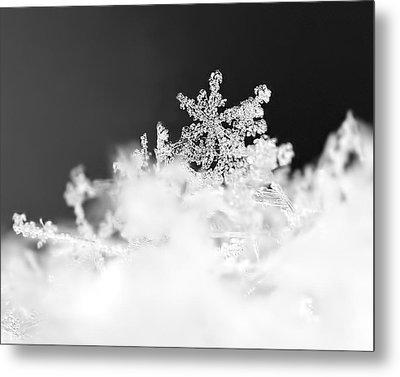 A Jewel Of A Snowflake Metal Print by Rona Black