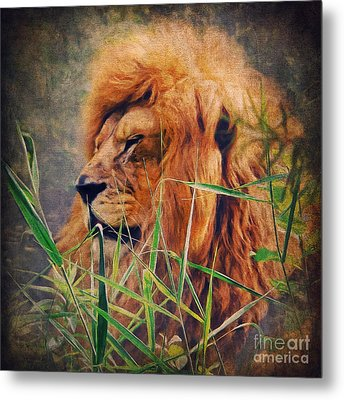 A Lion Portrait Metal Print by Angela Doelling AD DESIGN Photo and PhotoArt