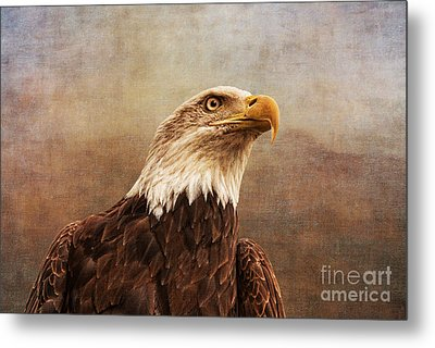 A Majestic Creature Metal Print by Cindy Tiefenbrunn