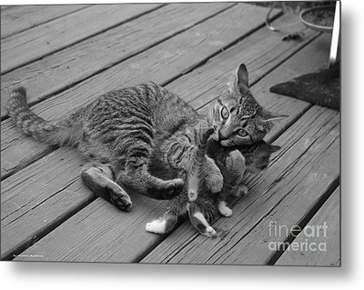 A Mother's Love Metal Print by Tannis  Baldwin