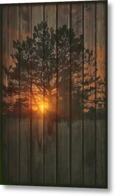 A New Tree Metal Print by Tom York Images