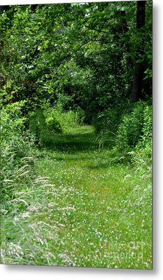 A Path Of Clover Metal Print by Eva Thomas