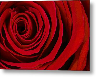 A Rose For Valentine's Day Metal Print by Adam Romanowicz