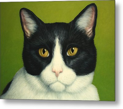 A Serious Cat Metal Print by James W Johnson