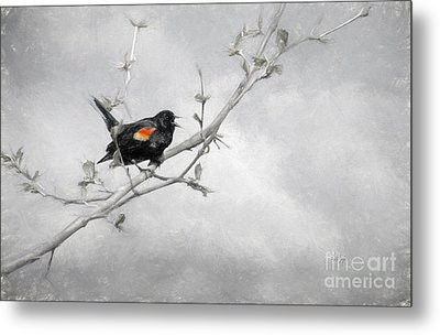 A Song Of Spring Metal Print by Lois Bryan