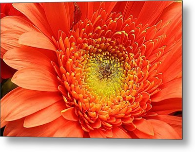 A Splash Of Happiness Metal Print by Bruce Bley