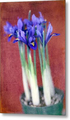 A Spot Of Color Metal Print by Rebecca Cozart