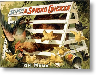 A Spring Chicken Metal Print by Aged Pixel