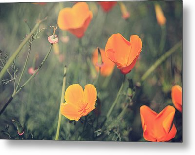 A Springtime Breeze Metal Print by Laurie Search