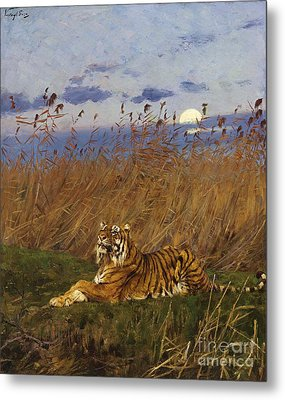 A Tiger In The Moonlight Metal Print by Pg Reproductions