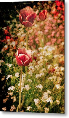 A Tulip's Daydream Metal Print by Loriental Photography