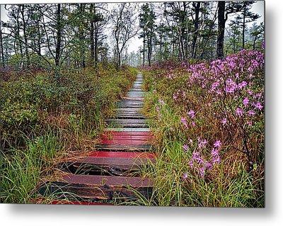 A Walk In The Heath Saco Maine Metal Print by Jeff Sinon