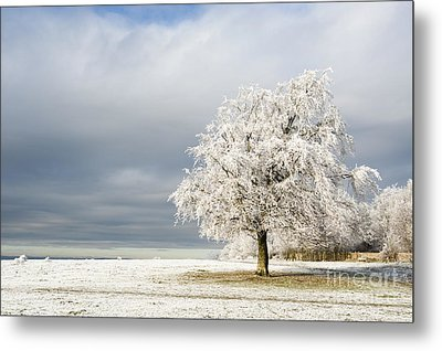 A Winter's Morning Metal Print by Anne Gilbert
