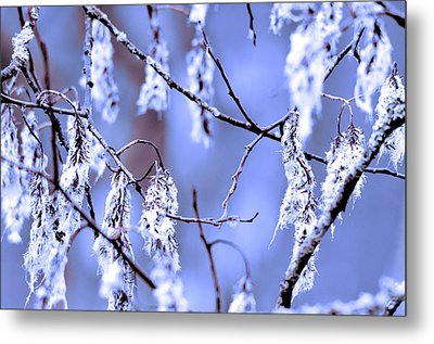A Withered Branch Metal Print by Toppart Sweden