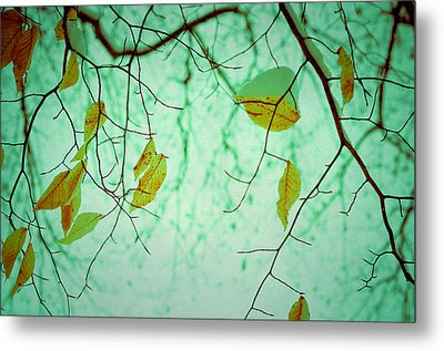 Above Metal Print by Joy StClaire