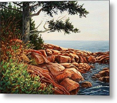 Acadia Tree Metal Print by Elaine Farmer