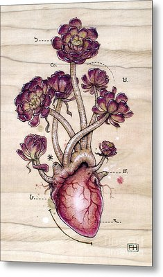 Aeonium Heart Metal Print by Fay Helfer