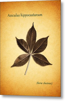 Aesculus Hippocaslanum Metal Print by Mark Rogan