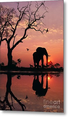 African Elephant At Dawn Metal Print by Frans Lanting MINT Images