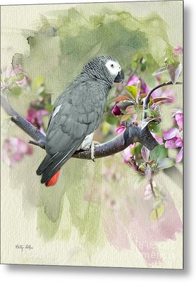 African Gray Among The Blossoms Metal Print by Betty LaRue