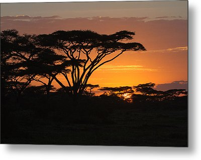 African Sunset Metal Print by Christa Niederer