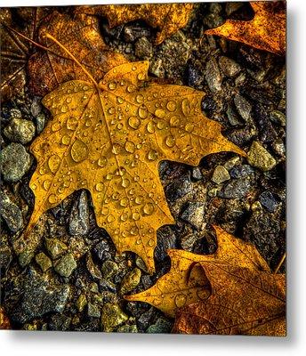 After An Autumn Rain Metal Print by David Patterson