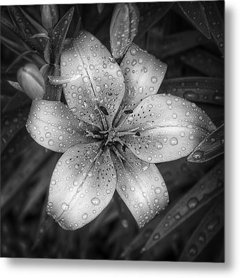 After The Rain Metal Print by Scott Norris