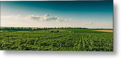 Agriculture Field And Perfect Sky Metal Print by Daniel Barbalata