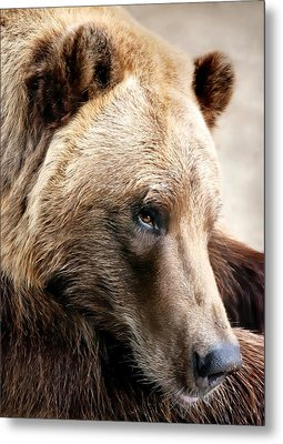 Alaskan Brown Bear Metal Print by Jim Hughes