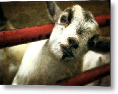 All In The Attitude Metal Print by Michelle Calkins