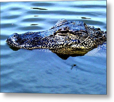 Alligator With Spider Metal Print by Robin Lewis