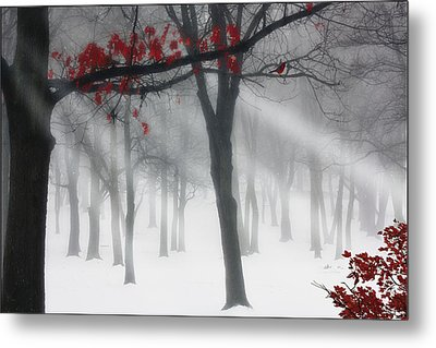 Alone In The Forest Metal Print by Tom York Images
