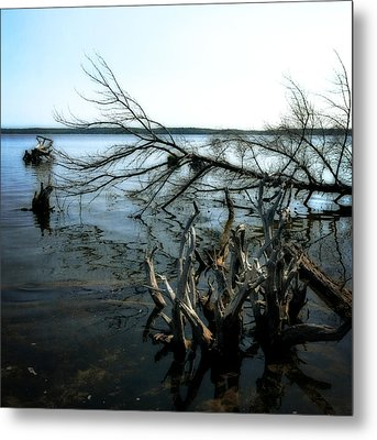 Along The Lost Lake Trail Metal Print by Michelle Calkins