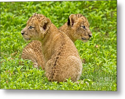 Alternative Interests Metal Print by Ashley Vincent