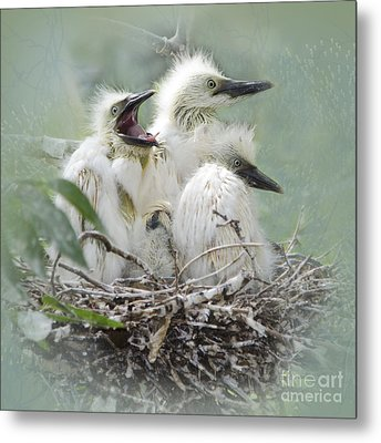 Always One In A Crowd Metal Print by Betty LaRue