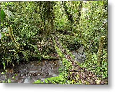 Amazonian Cloud Forest Metal Print by Dr Morley Read