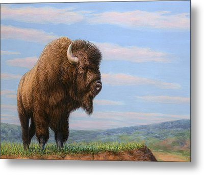 American Bison Metal Print by James W Johnson