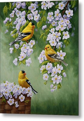 American Goldfinch Spring Metal Print by Crista Forest