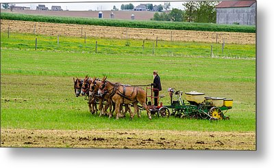 Amish Farmer Metal Print by Guy Whiteley