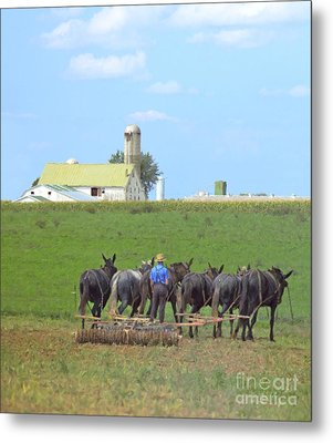 Amish Farmer Working The Land Metal Print by Diane Diederich