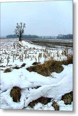 Amish Field In Winter Metal Print by Julie Dant