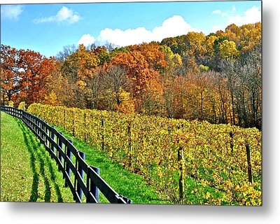 Amish Vinyard Two Metal Print by Frozen in Time Fine Art Photography