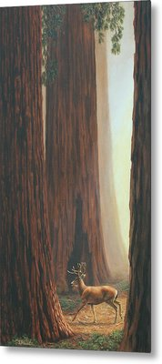 Sequoia Trees - Among The Giants Metal Print by Crista Forest