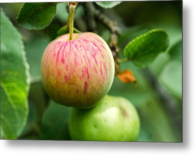 An Apple - Featured 3 Metal Print by Alexander Senin